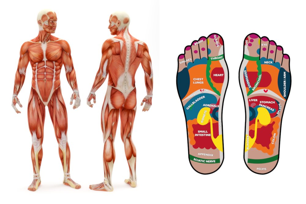 Baltimore School of Reflexology Basic Classes